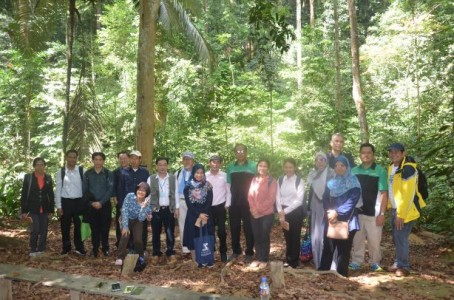 DOST-FPRDI researchers help merge ASEAN timber info