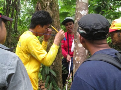 DOST-FPRDI conducts cinnamon conservation project